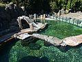 Zoo Praha, lachtan jihoafrický, výběh (1).jpg