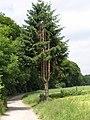 Zwiesel-2005-06a.jpg
