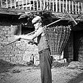 """""""Oprtnjak"""" z deteljo (tako ga nese z grabljami), Gabrk 1955.jpg"""