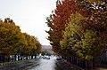 (((پاییز مراغه ))) - panoramio.jpg