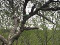 Žába v islandském lese - panoramio.jpg