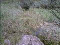 Балка Північна Червона 08.jpg