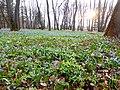 Ботанический сад им Келлера 03.jpg
