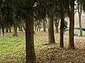 В осінньому парку.. - panoramio.jpg