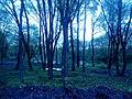 Гетьманський національний природний парк, Тростянецький лісгосп.jpg