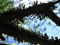 Дудергофские высоты, мох и паутина.jpg