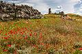 Квітучий Херсонес - 1.jpg