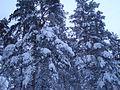 Красивая зима - mikroskops - Panoramio.jpg