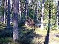 Медведь (Bear) - panoramio.jpg