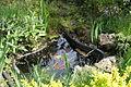 Невеличке озерце.JPG