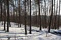 Німецькі окопи з Першої світової війни - panoramio.jpg