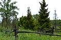 Огороженные деревья в центре деревни Колычевка (Мордовия, Россия).jpg