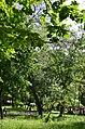 Парк Берёзовая роща в Киеве. Фото 13.jpg