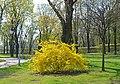 Парк Вічної Слави (Київ) 112.jpg