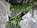 Скелі Мопра 24.jpg