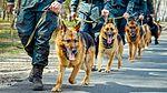 Собаки НГУ 4557 (19167181158).jpg
