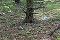Старопетрівські соснові насадження 08.jpg
