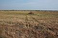 Степь к югу - panoramio (3).jpg