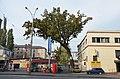 Шулявський дуб, вул. Індустріальна, 10.jpg