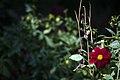 عکس از گلها و گیاهان باغ بوتانیکال تفلیس - گرجستان 14.jpg