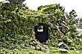 யாழ்ப்பாணக் கோட்டை.jpg