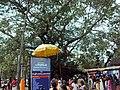 ഓച്ചിറപരബ്രഹ്മസന്നിധി.jpg