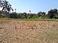 หมู่บ้าน นาพิพาน ต.ปะโค เมือง หนองคาย - panoramio (17).jpg
