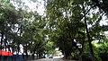 广东省江门市S271公路景色 - panoramio (17).jpg