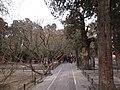 故宫御花园 - panoramio (1).jpg