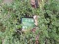 植物園中的植物及樹木花草(包括歷史遺跡)-45.jpg