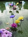 睡蓮 Water Lilies - panoramio.jpg