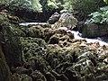荔波-茂兰-布满苔藓的涧石 - panoramio.jpg