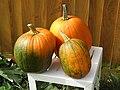 -2019-09-05 Three Pumpkin (Cucurbita pepo), Trimingham.JPG