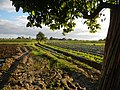 0126jfLandscapes Sunsets Fields Maronquillo San Rafael Bulacanfvf 27.JPG