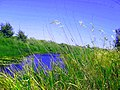 1314. Новохоперск. Река Савала.jpg