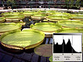 160604 kew-gardens-waterlily-house 2-normal-histogramm 640x480.jpg