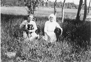 American Water Spaniel - American Water Spaniels, pictured in 1913