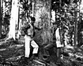 1959. P.E. Buffam and R.G. Mitchell on Chermes trend plot. Gifford Pinchot National Forest, Washington. (34777971010).jpg