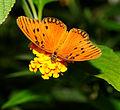 2011-08-08 15-16-10-papillon-hunawihr.jpg