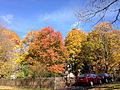 2014-11-02 12 28 42 Red Maples and Norway Maples during autumn along Broad Avenue in Ewing, New Jersey.JPG