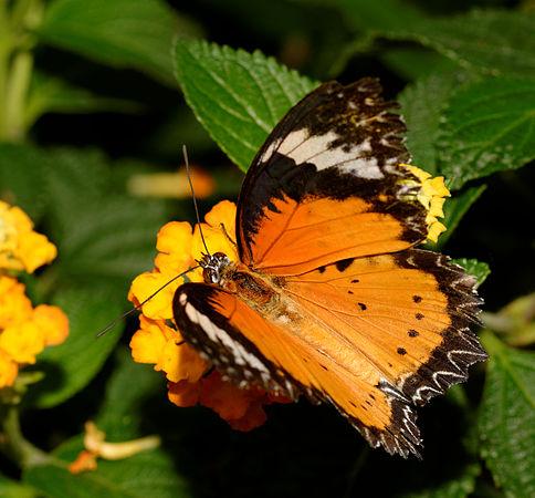 2015-10-24 13-08-56 papillon-hunawihr.jpg