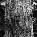 2016-09 Sentier des Moulins Saguenay - tree trunk 48.jpg