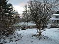 2017-12-10 07 21 48 A snow-covered yard and Crape Myrtle on the morning after a wet snowfall along Tranquility Court in the Franklin Farm section of Oak Hill, Fairfax County, Virginia.jpg
