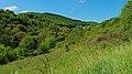 2017.05.26.-01-Kirnsulzbach--Landschaft.jpg