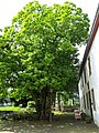 2018-05-25-bonn-am-burggraben-18-endenicher-burg-12.jpg