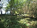 2018-07-25 Footpath in Foxhill woods, Northrepps (4).JPG