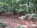2018-07-27 Cottage woods, Northrepps (3).JPG