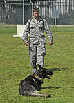 325th Security Forces Squadron military working dog training 151002-F-IH072-005.jpg
