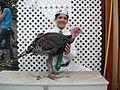 4-H turkey.jpg