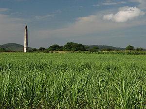Villa Clara Province - Sugarcane plantations in Villa Clara